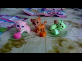 Про Маджиков котят (Кейт, Джимми и Мартин)
